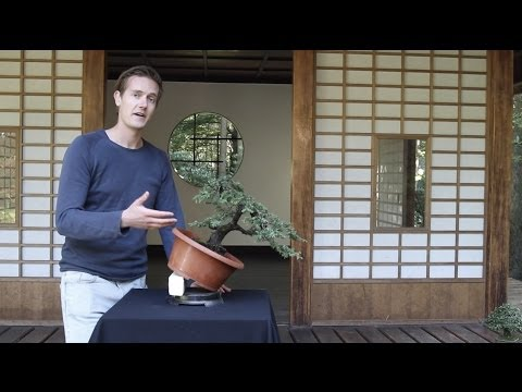 Download Bonsai Basics; how to grow a Bonsai tree HD Video