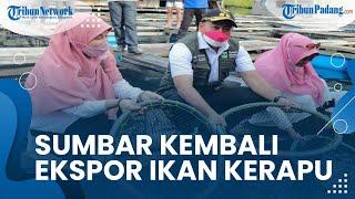 Sumbar Kembali Ekspor 20 Ton Ikan Kerapu ke Hongkong, Wagub Audy: Ekonomi Dunia Mulai Bergerak Lagi