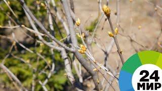 В Таджикистан в разгар зимы пришло весеннее тепло - МИР 24