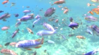 Malawi - Lake Malawi - Snorkel Paradise