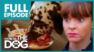 Food Thief Dalmatian: Pongo | Full Episode | Its Me Or The Dog