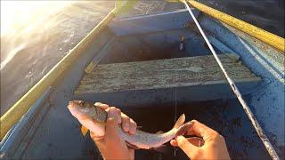 Настрои для рыбалки хариуса на ангаре