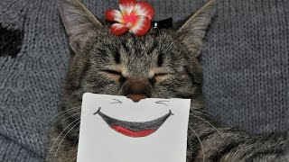 Кошки и собаки НА ПОЗИТИВЕ! Под веселую музыку смеемся вместе!