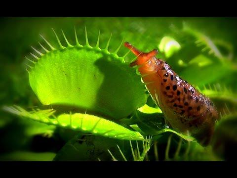 Die Vorbereitung des Fisches mit den Würmern