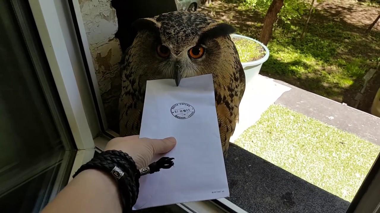 Сова принесла девушке письмо, но не отдает