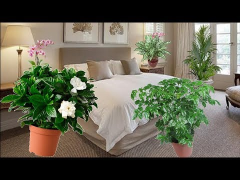 Какие цветы категорически НЕЛЬЗЯ держать в спальне, а какие МОЖНО и нужно!