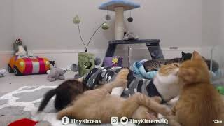 Cat moms survive ferocious kitten attack - TinyKittens.com