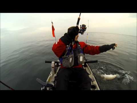 Nytårstorsken fanges på Øresund