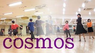 코스모스 (라인댄스, 써니 정) (단체)