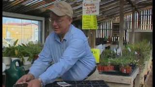 How To Start Tomato Plants From Seed