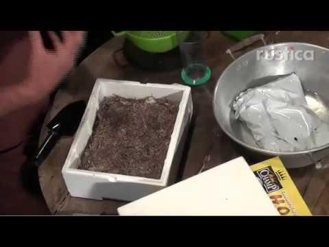 Les racines de lortie des parasites
