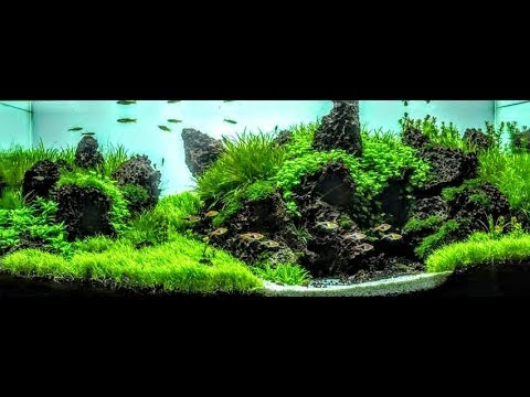 The Secret To Making Plants Bushy And Compact-Aquascaping