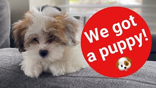 We Got A Puppy! Lhasa Apso-10weeks