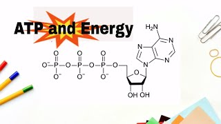 How do we get energy from ATP? (Adenosne Triphosphate)