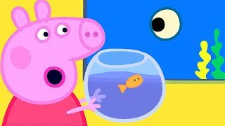 Peppa Pig Official Channel | Peppa Pig Aquarium Special