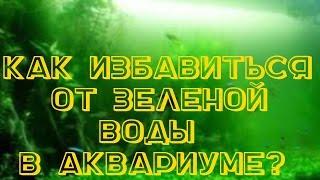 АКВАРИУМНЫЕ РЫБКИ, Зеленая вода в аквариуме. Почему зеленеет вода в аквариуме?