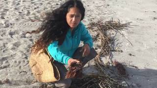 What I Found @ Beach For My Orchids