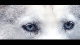 Saints Sled Dog Rescue climb Ben Lomond