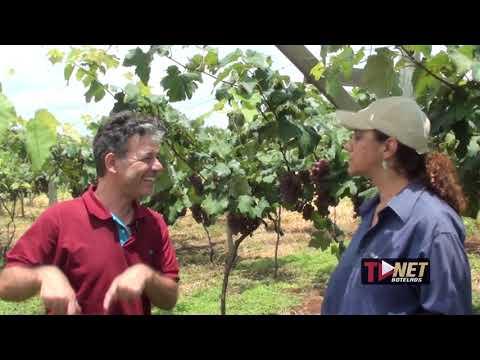 Agrônomo investe em produção de uvas em Botelhos. Produção já está à venda.