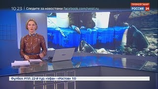 Екатерина Гринчевская Эфир от 08 04 2019