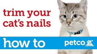 How to Cut Your Cat's Nails (Petco)