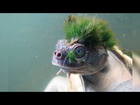 Why Everyone is Talking About the Punk Turtle?   Daily Planet