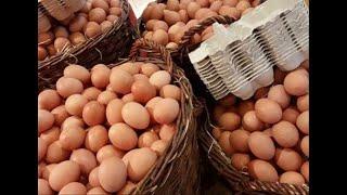 Allarme Salmonella: uova contaminate ritirate dal mercato - ECCO IL LOTTO