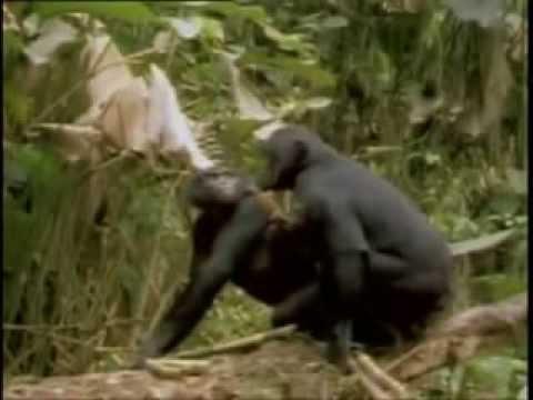 Дикие животные и животный секс под прикольные звуки