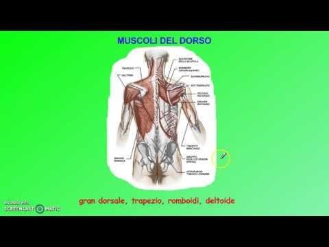 Dolore alla schiena e proprio trattamento gambe