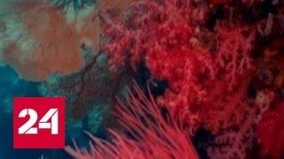 Китай ввел запрет на изделия из кораллов