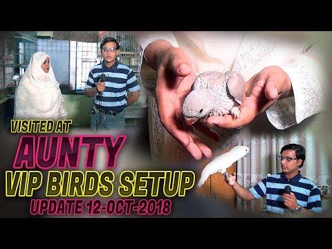 Visited At Aunty VIP Birds Setup 2018 (Jamshed Asmi Informative Channel) In Urdu/Hindi