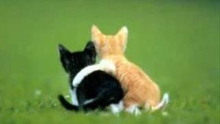 Cute Animals Pics