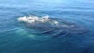Collégiens VS Requins