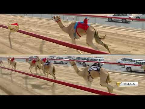مهرجان ختامي المرموم- إيذاع للشيوخ 6-4-2018 م- ش3 أشقر لـ هجن الرئاسة - علي جميّل الوهيبي 8:54:4