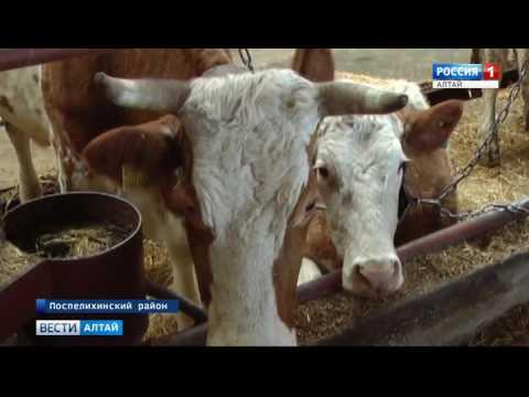 Как в Алтайском крае работает программа «Устойчивое развитие сельских территорий»?