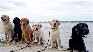 Guide Dogs Making a Splash: Senior Beach Day | Southeastern Guide Dogs