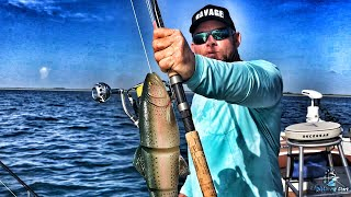 Using Giant Lure For Goliath Grouper Bait? Does Huge Savage Gear Swimbait Work?