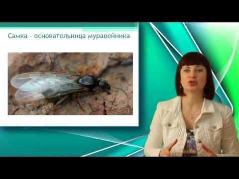 Гельминты может ли быть температура