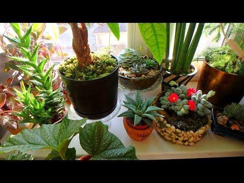 комнатные растения в марте ( 2020 год )
