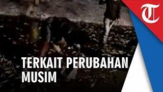 Viral Video Ribuan Ikan Lompat ke Daratan dan Dikaitkan dengan Gempa Bali, Ini Penjelasan Pakar