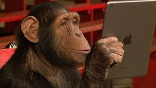 Download Youtube: Chimpanzees React To iPad Magic