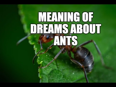 Meaning of dreams about ants - What does ant mean in a dream?