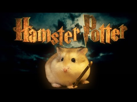 Hamster Potter - 'Harry Potter' with Hamsters