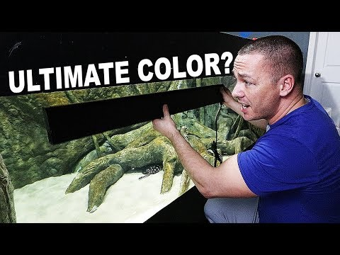 HOW TO increase fish coloration - with sun tanning?