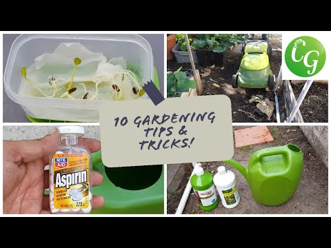 10 Gardening Tips & Ideas every gardener should know - Garden Tips & Advice!