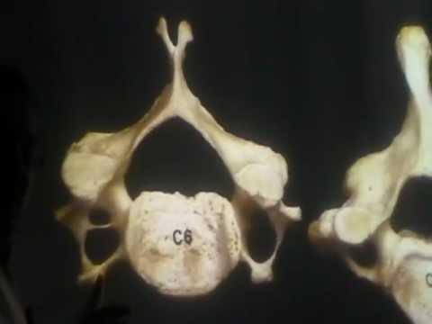 Un fastidioso dolore nelladdome e parte bassa della schiena