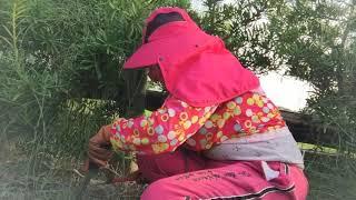 Tetap Semangat Potong Rumput Taiwan 4 Maret 2019🌳🌳🌳🍐🍐