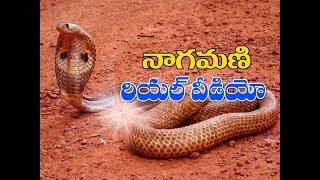 Nagamani   Nagamani in telugu   Nagamani real video (2018)    నాగ మణి   Nagamani real  Nagamani test