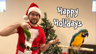 Happy Parrot Holidays & Announcement