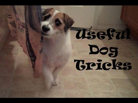 Useful Dog Tricks performed by Jesse (Original Video)